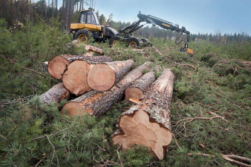 广西雅长林场上半年木材销售突破60万立方米