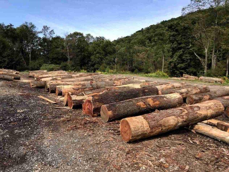 木材、运费双双涨价,2021年的家居人有多难?_1