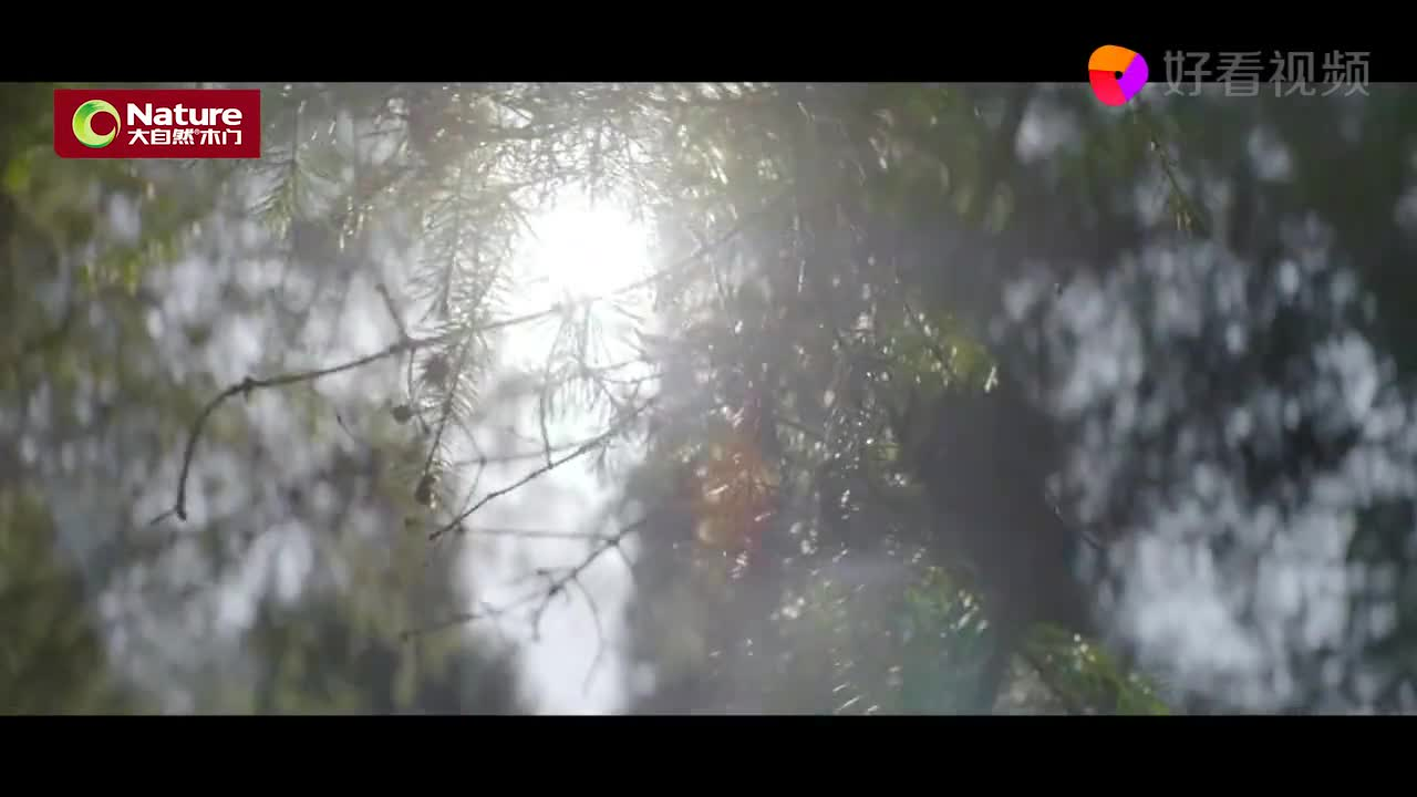 大自然木门视频宣传片